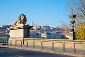 Budapest, lion statue at  the Chain bridge