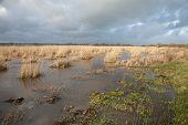 Reed Wetland.