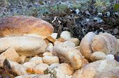 Old Breads In The Nature Closeup