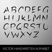 vector handwritten alphabet. calligraphic brushed letters collec