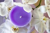 A Purple Candle Surrounded By White Flowers