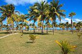 Coconut palms on the Atlantic coast