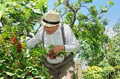 picture of gout  - the granddad lookin gout outdoor in the garden - JPG