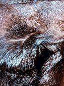 Fur texture.