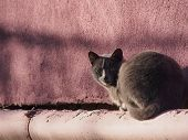 Cat in front of red wall