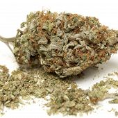picture of cannabis  - weed - JPG