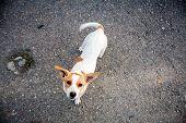image of homeless  - Small homeless dog asking for some food - JPG