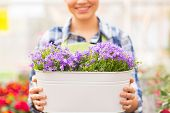 stock photo of pot plant  - people - JPG