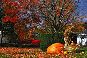 Colorful autumn with pumpkins