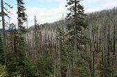 Beetle Kill and Wildfire damage