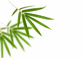 stock photo of bamboo leaves  - bamboo leaves isolated on white background - JPG