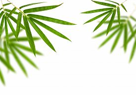 pic of bamboo leaves  - bamboo leaves isolated on white background - JPG