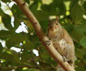 Squirrel perching on a branch