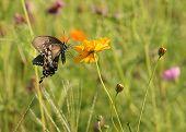borboleta no campo de flores silvestres