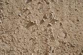 Concrete surface.