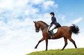 picture of girth  - dressage - JPG