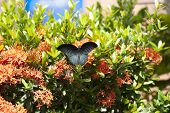 Butterfly On A Tropic Plant