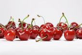 isolated cherries on white background