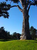 Man Looking Tree