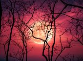 Night Landscape Of Sky With Bright Super Moon Behind Silhouette Of Dead Tree. poster