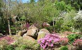 Rock Garden - Sayen Gardens