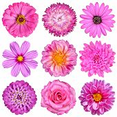 Selection Of Pink White Flowers Isolated On White