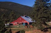 Colorado Country Red Barn And Horses