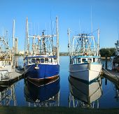 Prawn Trawlers At Dock