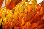 Cactus silk strands drying in the sun in a Moroccan souk