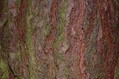 Rough Tree Bark For Background poster