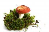 Isolated Mushroom