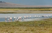 Pink Flamingos Into The Ngorongoro
