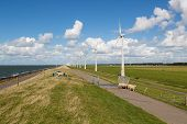 Sheep, Sea And Wind Turbines In The Netherlands