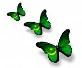 Three Mauritanian Flag Butterflies, Isolated On White