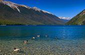 Pure Lake Rotoiti