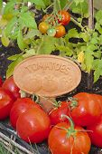 Tomatoes With A Name Label Or Plaque
