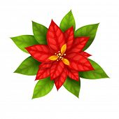 Red Christmas Star flower poinsettia isolated on white background - eps10 vector illustration