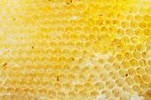 Yellow honeycomb