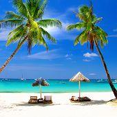 perfect tropics