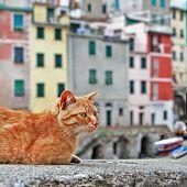 Traditional Italy series - colorful  Riomaggiore village, Cinque terre