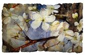 stock photo of expressionism  - Watercolor painting of the blooming spring tree on vintage paper isolated on white - JPG