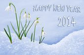 Happy New Year 2014 greeting card group of snowdrops