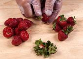 Hulling strawberries