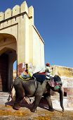 JAIPUR - MARCH 21 2013 : Elephants descending from Amber Fort, in Jaipur, Rajasthan, India