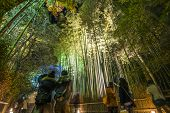 KYOTO, JAPAN - DECEMBER 11, 2012: Tourists observe the annual light up in the Chikurin Bamboo Forest of Arashiyama. Light up events are often held to coincide with the seasons.