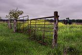 Texas Spring Field