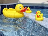 Rubber Ducks In The Tub