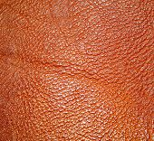 picture of crocodilian  - Background of Dark Red and Brown leather texture - JPG