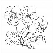 Pansy.sketch Black And White
