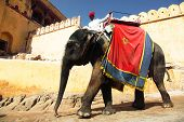 JAIPUR, INDIA - MARCH 21 2013 : Elephants descending from Amber Fort, in Jaipur, Rajasthan, India